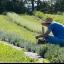 Lochland Botanicals - Herb & Flower Farm 1st Annual Photographer Appreciation Day!