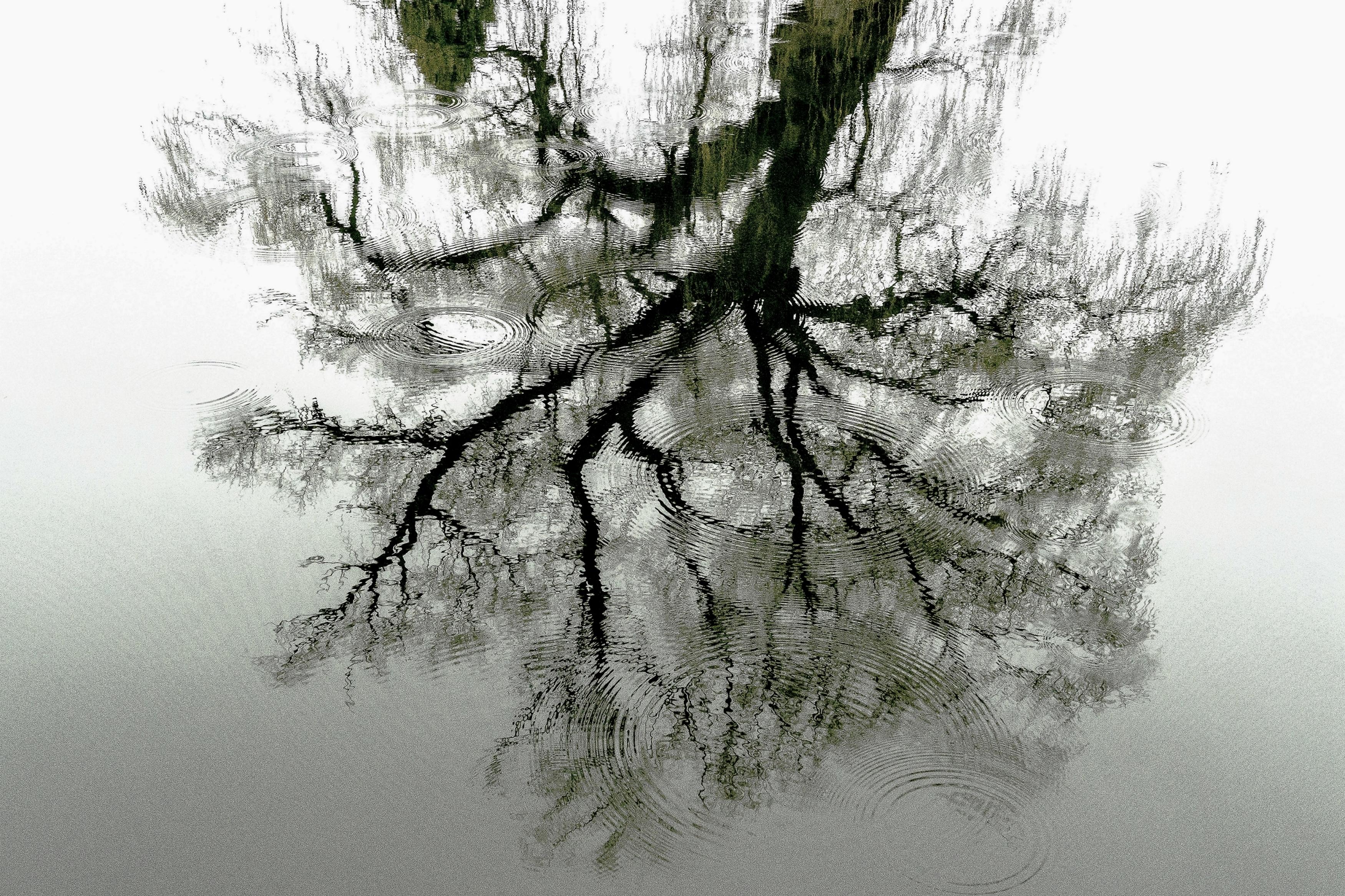 Liquid Tree by Monica Dingle