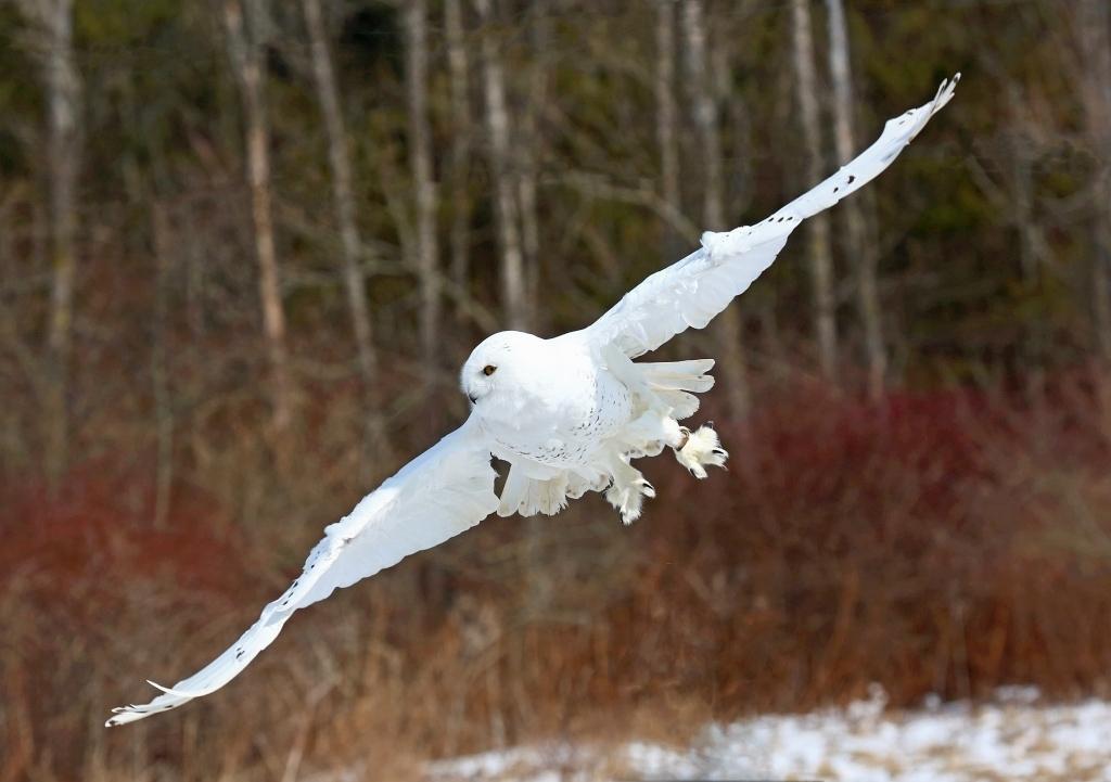 Canadian Raptor Conservancy 2020-03-01
